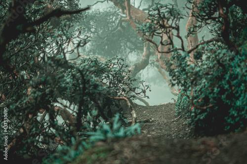Polylepis Forest Fotobehang