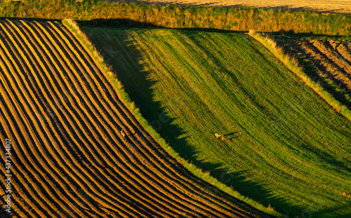 spring panorama of fields on farmland cultivated extensively and ecologically #437334807