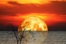 Reflection Full Crust Blood Moon And Silhouette Tree In The Sea And Night Sky