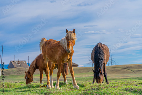 Canvas horse and foal