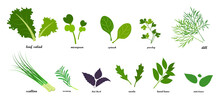 Set Of Fresh Green Leafy Vegetables, Salad Dressings In Flat Style, Infographics With Text
