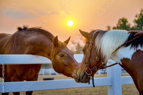Canvas Two horses embracing in friendship