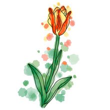 Hand Drawn Vector Of Yellow And Red Tulip Flower Isolated On White Background. Stock Illustration Of Garden Plant With Watercolor Background And Spots.
