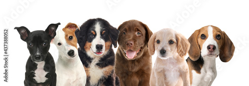 Foto Group of adorable puppies on white background. Banner design