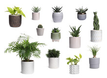 Set With Different Beautiful Houseplants On White Background