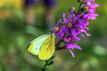Purple Flower With Yellow Butterfly