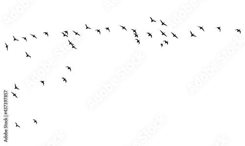 Slika na platnu Flying birds. Vector images. White backgorund.