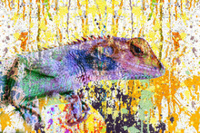 Close Up Of A Chameleon