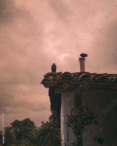 Fotografia vulture and chimney on the roof