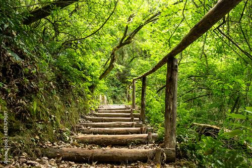 Camino de madera en el bosque Fototapet
