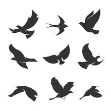 Set Silhouettes Birds Motion White Background_10