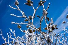 雪のついた枝