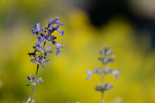 Pretty Purple Flower With Blurred Yellow Green Background