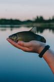 les, reka, priroda, svezhest', rybalka, ryba  forest, river, nature, freshness, fishing, fish