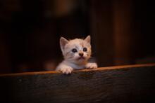 A Cute Little Kitten Exploring The World Around Her