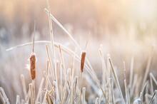 Sunrise In Wetland