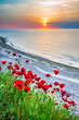 Red poppies field Black Sea - Vama Veche, Romania