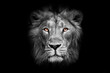 lunar lunar with bright orange eyes lion face male lion full screen black red mane serious look