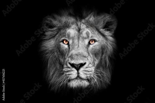 Fototapeta lunar lunar with bright orange eyes lion face male lion full screen black red ma