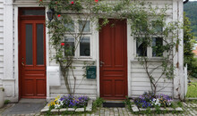 Picturesque Facade Of A Traditional Wooden House In White On The Wooden Exterior, White Windows, And Red Door. Beautiful Courtyard, With Impressive Red Roses And Other Flowers. Bergen, Norway