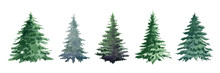 Fir Tree Watercolor Set. Hand Drawn Realistic Lush Pine Watercolor Illustration. Green Forest Plant Element. Christmas Tree Object On White Background. Evergreen Natural Fir Tree Collection