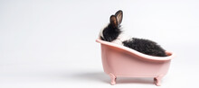 Baby White And Black Spotted Rabbit Or Bunny Animal Small Bunnies Easter Is Sitting In A Pink Bathtub And Funny Happy Animal Have White Isolated Background