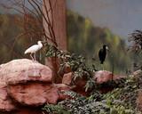 Fototapeta Fototapety do łazienki - ptaki na kamieniach