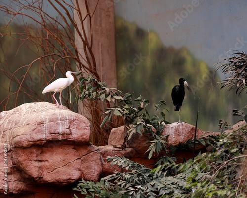 ptaki na kamieniach