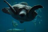 Fototapeta Fototapety do łazienki - płynący żółw galapagos