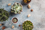 Succulent and cactus plants on concrete stone background. Minimal floral flat lay