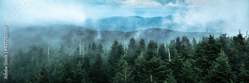Panoramic View Of  Mountain Ridges With Fog And Pine Trees At Dusk #437762038