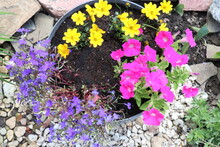 Top View Of A Flowerpot With Purple, Pink And Yellow Flowers