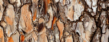 Rustic Wood Bark Texture Background Panoramic. Pine Tree Texture Abstract Backdrop.