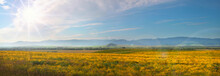 Flowering Field In The Altai Foothills, Spring