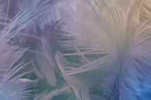 Beautiful Colorful Violet Gray Feather Texture Background, Pastel Trends Mix Color