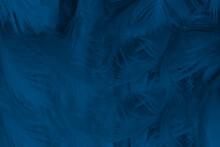 Beautiful Macro Dark Blue Feather Pattern Texture Background