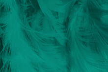 Beautiful Dark Green Vintage Color Trends Feather Texture Background