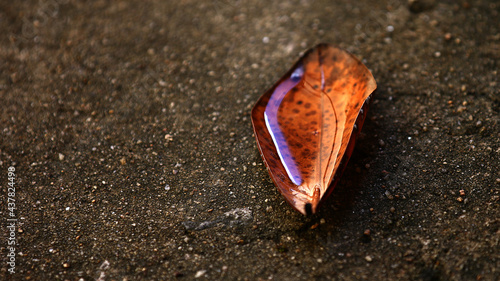 Fotografie, Obraz Folha no chão