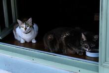 Chats Assis Sur Le Rebord D'une Fenêtre