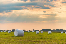 Haylage Bales Wrapped In White Foil Will Provide Food For Farm Animals During The Winter. A Green Meadow In The Background Of The Setting Sun After Summer Hay.