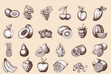 24 Fruits Hand Drawn Sketch