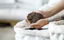Master Brewer Checks Barley Seeds Before They Are Introduced Into Brewing System