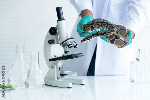 Scientists are working to study snakes in hands in the lab, study of biology on reptiles