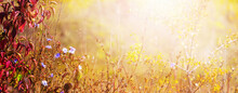 Autumn Background With Colorful Leaves And Chicory Flowers On A Blurred Background In Sunlight In Warm Autumn Colors