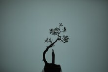 Silhouette Of A Tree In A Vase