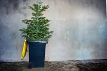 Christmas Tree Thrown To The Trash Bin On A Street
