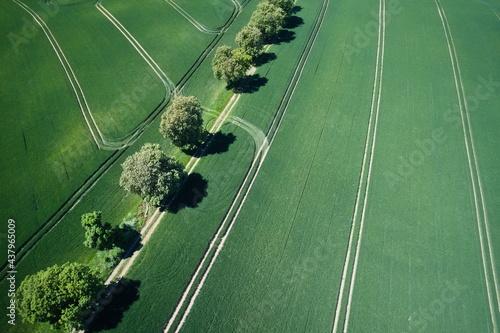 krajobraz pole z drzewami lato dron