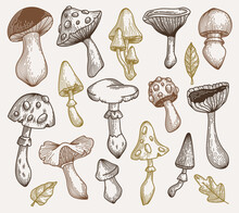 Hand Drawn Mushrooms Collection. Vector Sketch Illustration In Brown Natural Colors. Outline.
