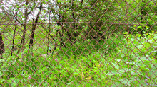 The Wire Mesh Behind Which The Plants