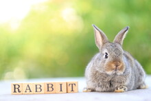 Young Baby Rabbit Is On Wood With Green Bokeh Nature Background. Adorable And Cute New Born Rabbit .Rabbit Word In Wood Block For Banner